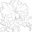 KAORI ( Staticethyme )