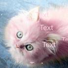kittiesgalore