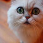 meow【にゃー】 ( me-me-meow )