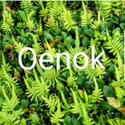 おーえのっく ( OenoK )