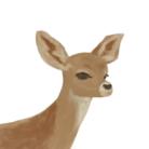 鹿の手売り ( bkyd )