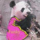 PandaFunk(Taguchi) ( PandadaFunkish )