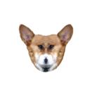FUNKY  DOG ( funky-dog )