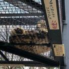 砂珠 魚子 ( sakanakosan )