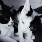 4.e ( four_cats_eyes )