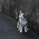 やまとねこ ( yamatoneko )