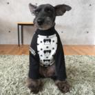 DOG  CHUM ( dogchum )