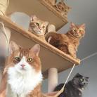 ネコまにあ 【12匹の猫➕うずら】 ( suzukotegin )