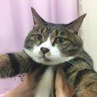 猫のタマ ( favor_nyanko )