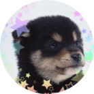 ヒミツ(犬)@teamdragon ( himiturun2 )