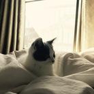cat.kotetsu ( momomi__8y )