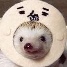 ハリネズミの葉月 ( shimihazu )