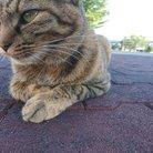 社畜猫@競馬中毒者の祭典 ( keiba_addictcat )