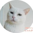 保護猫カフェにゃんず ( yoppy443 )