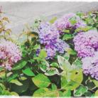 架守 ( Kae-Lilac1129 )