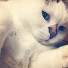yukijiro_cat