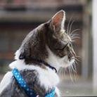 シンバの宝箱 ( simbaba__cat )