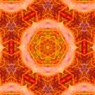植物曼荼羅屋~Plant Mandala~ ( plant_mandala612 )