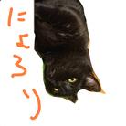 ゴマのような猫 ( gomagomagomashio )