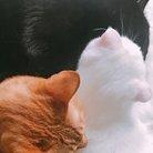おがわ@ミルクボランティア ( three_cat_s )