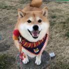 ハナちゃんの! ( shibainuHANA )