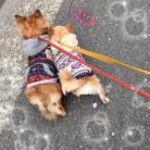 うちの愛犬 ( LufCob )