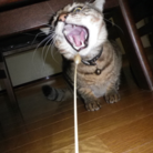 たまごやっき ( tamagoyakki )