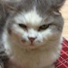 ポンプマン@鉄血の一匹狼な野良猫㌠ ( pompman27 )