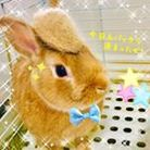 Lapin_cookie ( lapin_cookie )