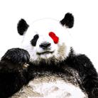 ゆるパンダのネットの話題ch 公式グッズSHOP ( yurupanda )