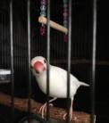 love♡bird-m ( 375nWTdrWxVO4rn )