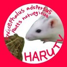 HARUチャンネルTV ( HARUchTV )