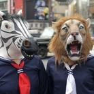隣のライシマさん ( lion_zebra )