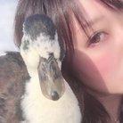 あひるさん ( dillinger_duck )