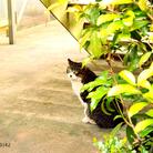 写真家野良猫さん家 ( noraneko_9142 )