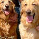輸入犬雑貨GOLDY DOG ( GOLDY_DOG )