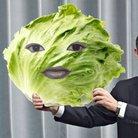Lettuce ( lettuce_oisi )