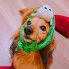 クソ犬SHOP ( kusoinukusoinu )