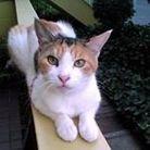 pf_cat