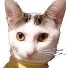 猫のリリィ ( lilyurico )