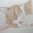 今日も猫日和♪ ( sweetviolet )