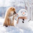 ヘッポコレンジャー ( snowman9snowman )