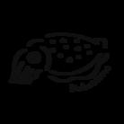 水辺のいきものやさん ( ikachan_dive2 )