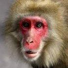 猿 ( AhosEid )