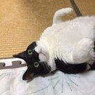 金魚猫 ( kingyo3neko3 )