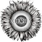KIDNEY ( kidney )