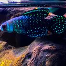 アクアリウムグッズ販売店 ( fishgoods )