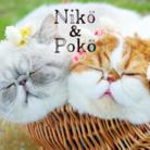 Niko&poko ( exoticniko )