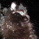 Litoraneo il gattino ( cocoapowder )