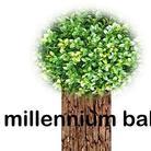 Millennium baby ( Millennium_baby2000 )
